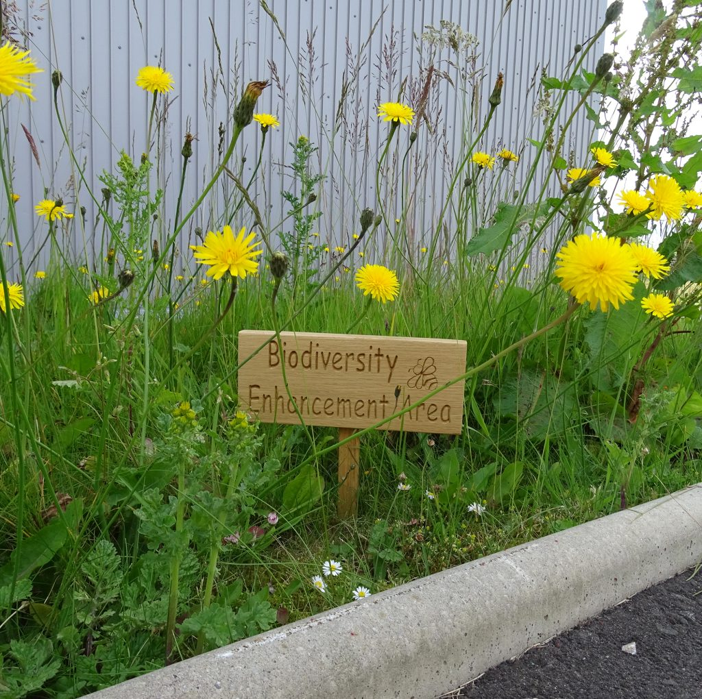 """A sign saying """"biodiversity enhancement area"""" in grass with wildflowers."""